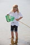 传染性的虾 免版税库存图片