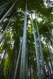 传统公园的竹森林 免版税图库摄影