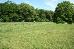 传统农业在一个主题历史公园 库存照片