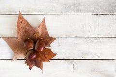 传统加泰罗尼亚语万圣夜党castanyada 在叶子和白色木桌的三个栗子 空的拷贝空间 库存图片