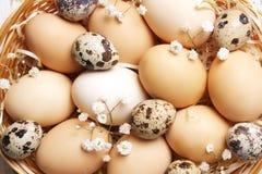 传统复活节卡片模板用在柳条筐的没有漆的混杂的有机鸡蛋与干草和装饰野花 免版税库存图片