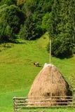 传统干草堆在Rucar地区,罗马尼亚 青山、绿色吃草森林和唯一的母牛 免版税库存图片