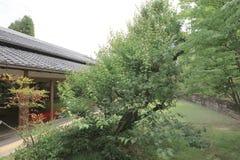 传统日本室和走道在庭院 库存照片