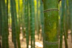 传统的竹森林在镰仓日本guarden 免版税库存图片