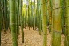 传统的竹森林在镰仓日本guarden 库存照片