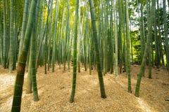 传统的竹森林在镰仓日本guarden 库存图片