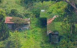 传统自然农村生活,被顶房顶的概念锌,木房子在自然的母亲中有 绿色生存攀缘藤本 库存图片