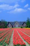 传统荷兰语的房子 免版税图库摄影