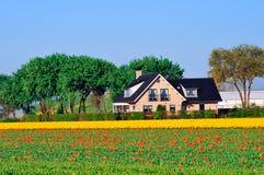 传统荷兰语的房子 免版税库存图片