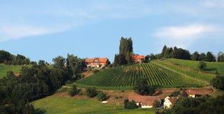 传统葡萄园在更低的施蒂里亚 库存照片