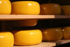 传统zaanse schans乳酪在荷兰 手工制造农场干酪 免版税库存图片