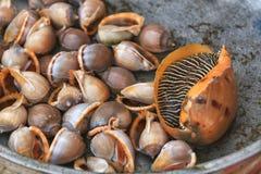 传统亚洲鱼市 库存照片