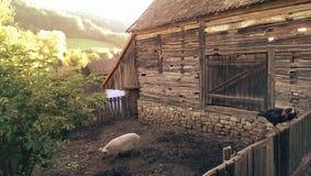 传统农场在特兰西瓦尼亚 库存照片