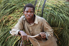 传统农夫运输新鲜的干草,坦桑尼亚 免版税库存照片