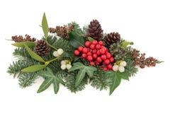 传统冬天植物群 库存图片