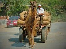 传统古吉特拉人运输 免版税库存照片