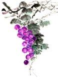 传统古老中国手画果子,葡萄 图库摄影