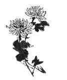 传统古老中国手画菊花 库存照片