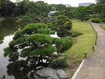 传统日语漫步有池塘和杉树的庭院 免版税库存照片