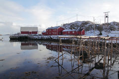 传统木机架鳕鱼垂悬在日落的地方enlighted的一间红色客舱旁边烘干, Steine在Lofoten海岛,极性 库存照片