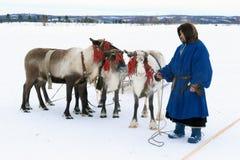 传统毛皮衣裳和reind的男性Nenets驯鹿牧民 免版税库存图片
