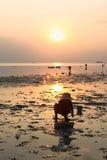 传统泰国帽子的人收集螃蟹在日落 免版税库存照片