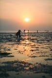 传统泰国帽子的人收集螃蟹在日落 库存图片