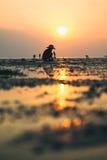 传统泰国帽子的人收集螃蟹在日落 图库摄影