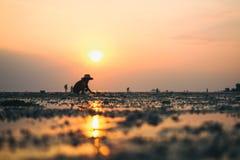 传统泰国帽子的人收集螃蟹在日落 库存照片