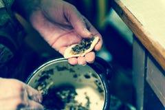 传统的饺子 免版税库存照片
