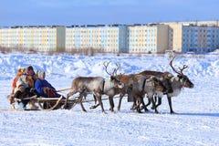 传统礼服骑马的Nenets妇女在驯鹿雪橇 免版税库存图片