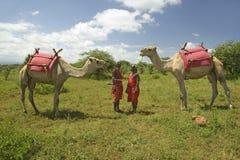 传统红色宽外袍的两个马塞人战士摆在与他们的骆驼在Lewa野生生物管理在北部肯尼亚,非洲 免版税库存照片
