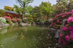传统红色寺庙和樱桃树开花 库存照片