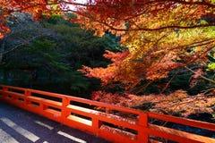传统红色桥梁和五颜六色的秋天槭树在京都,日本 图库摄影