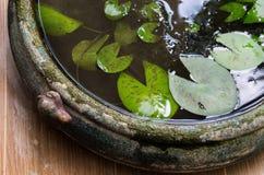 传统莲花留给罐水在庭院 免版税库存图片