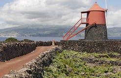传统葡萄园种植园风车在Pico海岛 亚速尔群岛 库存照片