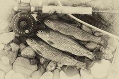 传统葡萄酒鳟鱼渔 免版税库存图片