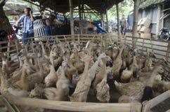 传统鸭子市场 库存照片