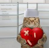 伤心的猫愈疗者 图库摄影