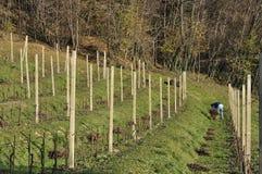 伦巴第葡萄园冬天工作 免版税库存图片