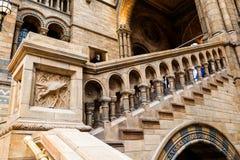 伦敦、英国、自然历史博物馆-大厦和细节 免版税图库摄影