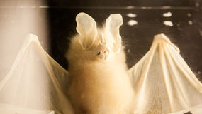 伦敦、英国、自然历史博物馆-被保存的动物和种类,实验室细节 库存图片