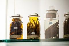伦敦、英国、自然历史博物馆-被保存的动物和种类,实验室细节 免版税图库摄影
