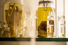 伦敦、英国、自然历史博物馆-被保存的动物和种类,实验室细节 免版税库存照片
