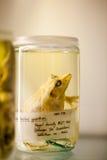 伦敦、英国、自然历史博物馆-被保存的动物和种类,实验室细节 免版税库存图片
