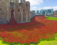 伦敦塔和Poppys在护城河 库存图片