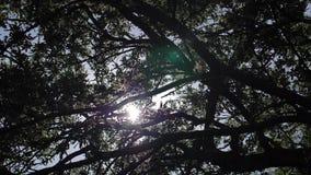 伦敦树和天空和太阳 股票录像