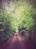 伦敦森林 图库摄影