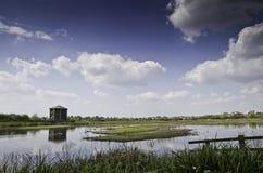 伦敦沼泽地中心鸟皮 库存图片