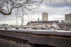 伦敦海鸥 免版税图库摄影